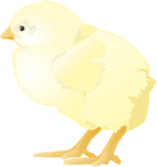 chicken1.png
